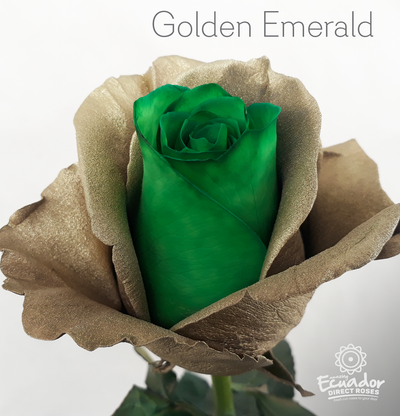 GOLDEN EMERALD -Bicolor Tinted Rose