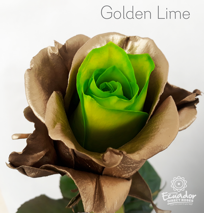 GOLDEN LIME -Bicolor Tinted Rose
