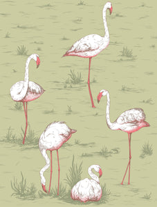 Cole & Son Flamingos 112/11038