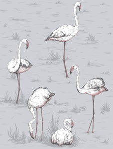Cole & Son Flamingos 112/11040