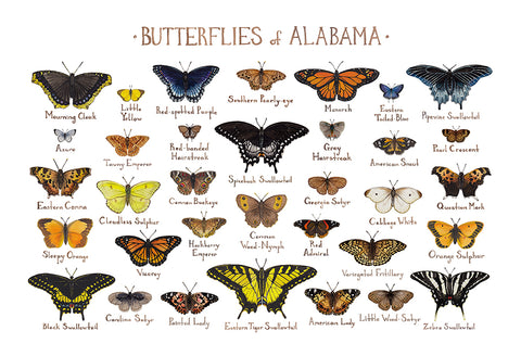 Wholesale Butterflies Field Guide Art Print: Alabama
