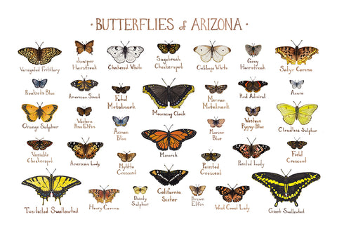 Wholesale Butterflies Field Guide Art Print: Arizona