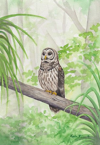 Barred Owl Painting