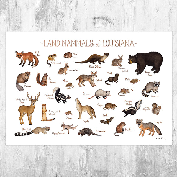 Louisiana Land Mammals Field Guide Art Print