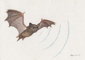 Bat Sonar Painting