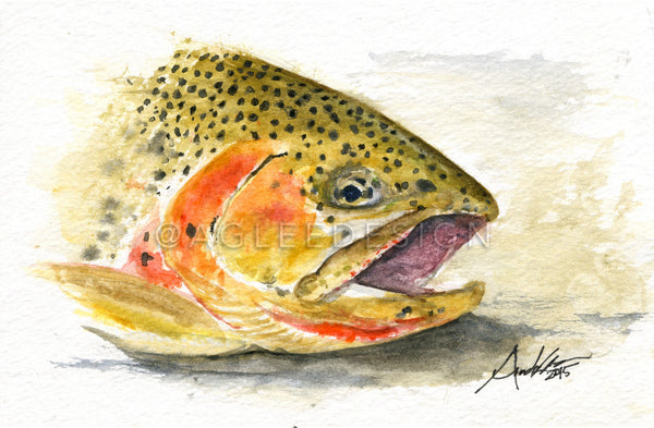 Cutthroat Trout Head Study