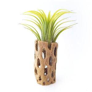 Cholla Wood Plant Holder with Plant