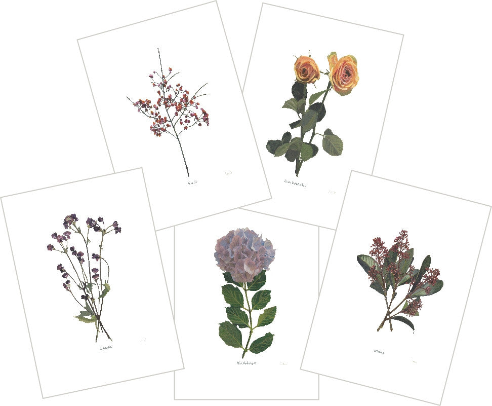 Mixed Flowers : Pack of 10 Cards