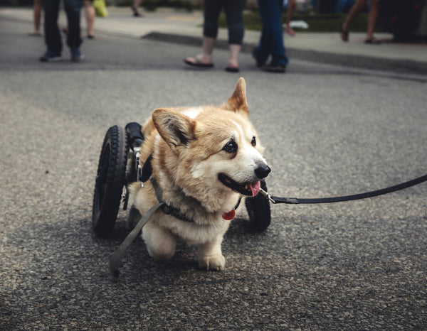 3 Inspiring Differently-Abled Dogs