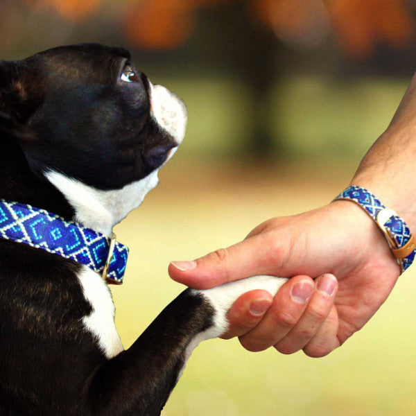 Mucky Pup Friendship Collar and Bracelet
