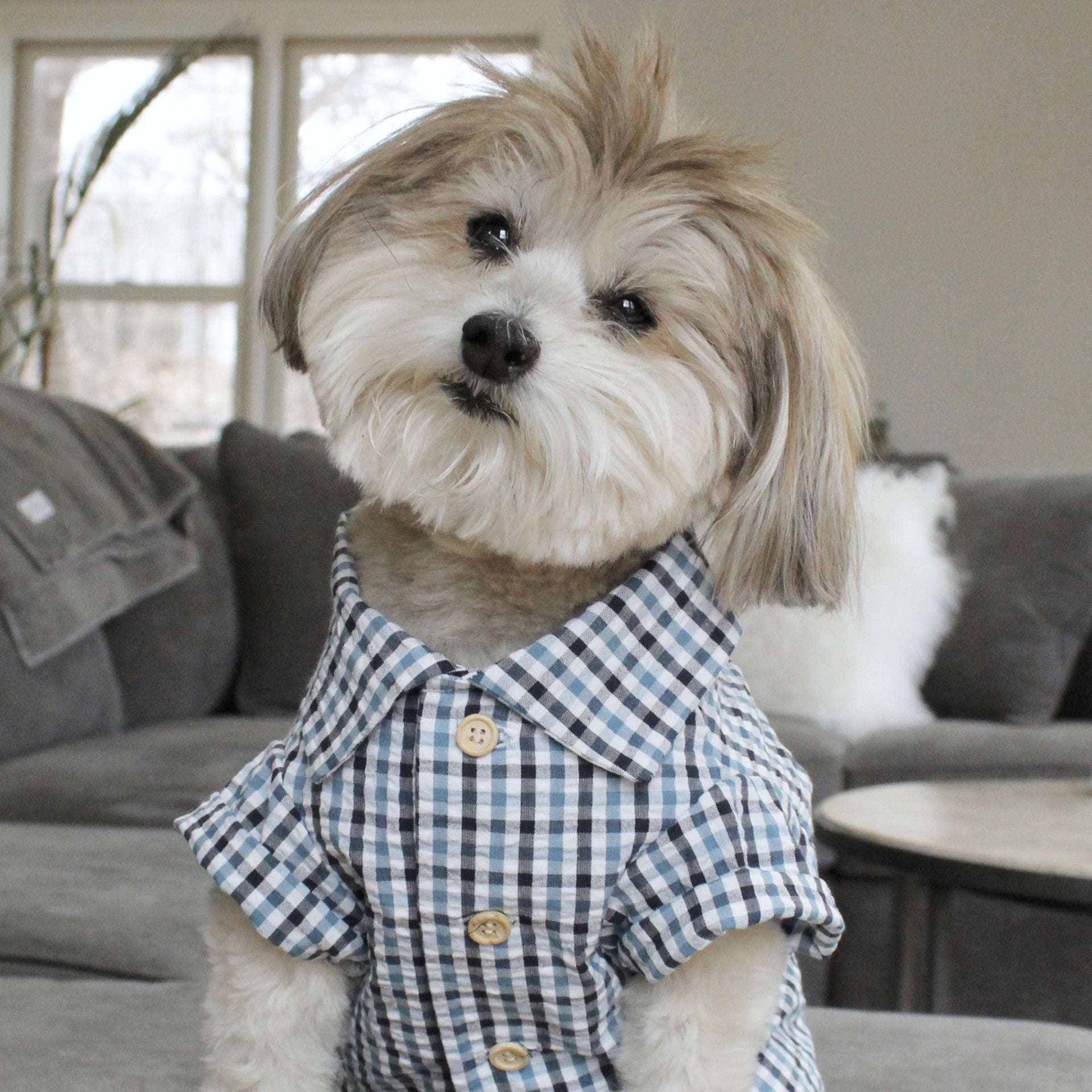 Mini-Check Seersucker Plaid Shirt by Dog Threads