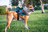 BrilliantK9 Ergonomic Dog Harness Ares