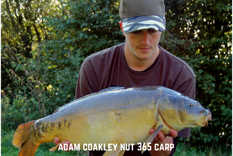 Adam Coakley Nut 365