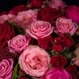 Pink and Red Roses