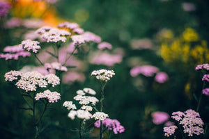 Yarrow (color)