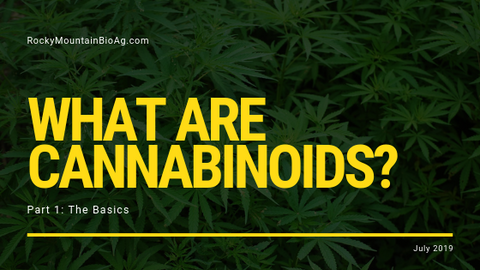 What Are Cannabinoids? Part 1: The Basics