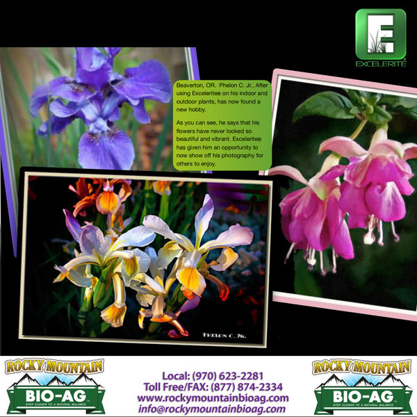 Beaverton Oregon Flower Testimonial EXCELERITE Calcium Montmorillinite Clay Trace Elements and Minerals - Rocky Mountain Bio-Ag