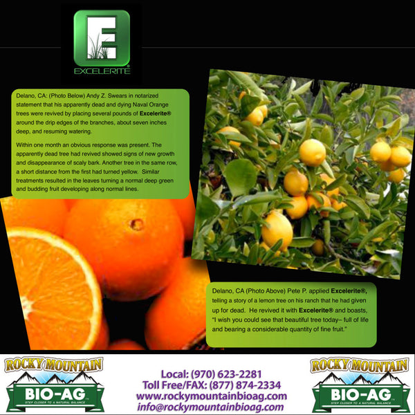 Delano California Andy Z. Dead and Dying Naval Orange Tree Revived By Excelerite Pete P. Dead and Dying Lemon Tree Revived By Excelerite Citrus Testimonial EXCELERITE Calcium Montmorillinite Clay Trace Elements and Minerals - Rocky Mountain Bio-Ag