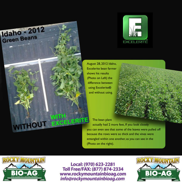 Idaho Green Beans Love Excelerite Testimonial EXCELERITE Calcium Montmorillinite Clay Trace Elements and Minerals - Rocky Mountain Bio-Ag