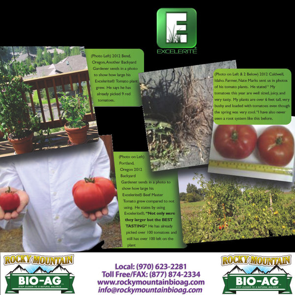 Excelerite Trace Minerals The Best For Tomatoes Testimonial EXCELERITE Calcium Montmorillinite Clay Trace Elements and Minerals - Rocky Mountain Bio-Ag