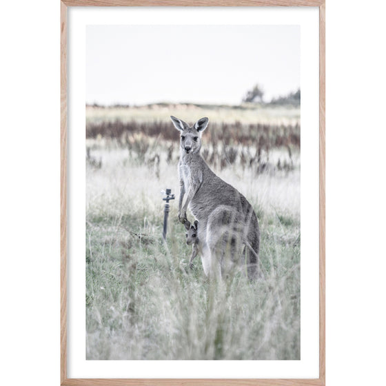 KANGAROO BOND *  Photographic archival, fine wall art kangaroo print
