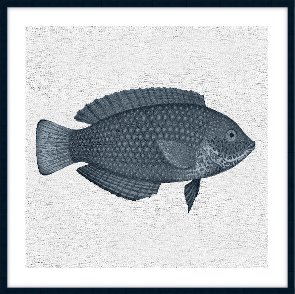 TROPICAL FISH COLLECTION #4 * Contemporary hand painted artwork, fine art print