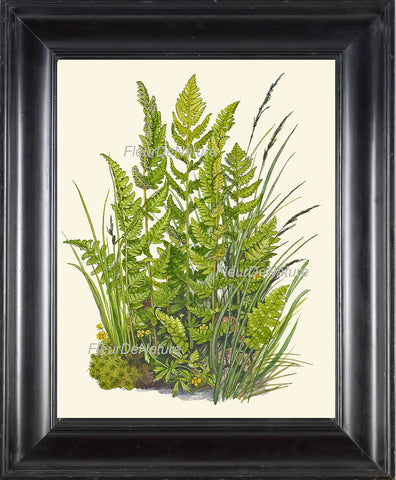 Antique Fern Lindman  Botanical Art Print 5 Antique Beautiful Green Ferns Summer Green Forest Nature Natural Science to Frame Wall Decor