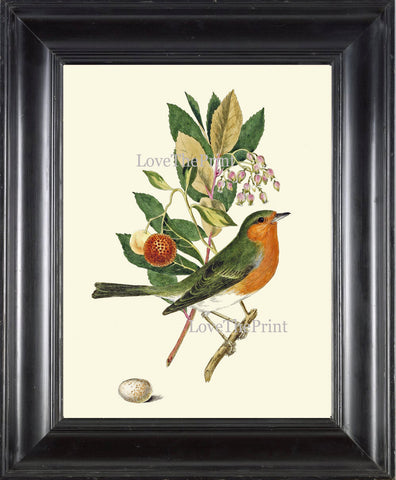 Antique Bird Print Art 3 Beautiful Songbird Green Tree Branch Leaf Fruit Berries Forest Nature Birdwatching Gift Wall Home Room Decor CJ