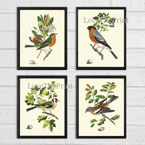 Bird Print Set of 4 Art Prints Beautiful Antique Tree Branch Egg Berries Botanical Green Forest Garden Nature Illustration Decor to Frame JC