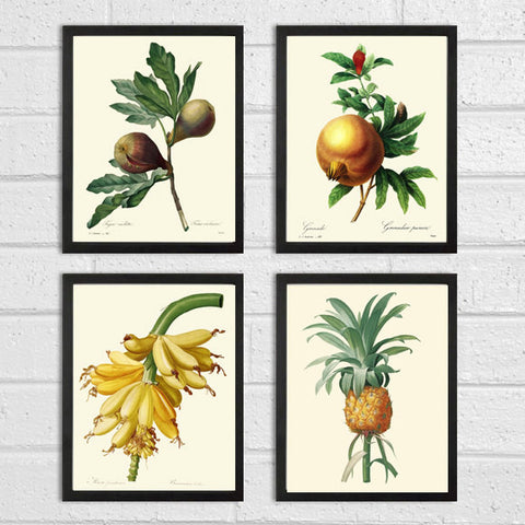 Botanical Flower Print SET of 4 Art  Redoute Antique Tropical Garden Banana Pineapple Fig Fruit Chart Plants Vintage Home Decor to Frame