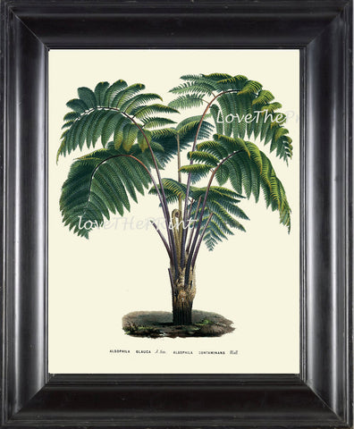 BOTANICAL PRINT Houtte Flower  Botanical Art Print 61 Beautiful Antique Palm Tree Tropical Island Garden Wall Home Decor to Frame
