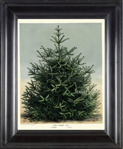 BOTANICAL PRINT HOUTTE  Art Print 83 Beautiful Large Green Pine Tree Christmas Forest Nature Home Wall Decor to Frame