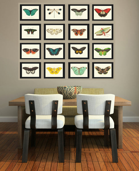 BUTTERFLY PRINT  Botanical Art Print NOD165 Beautiful Insect Colorful Spring Summer Flower Garden Nature Home Room Wall Decor to Frame