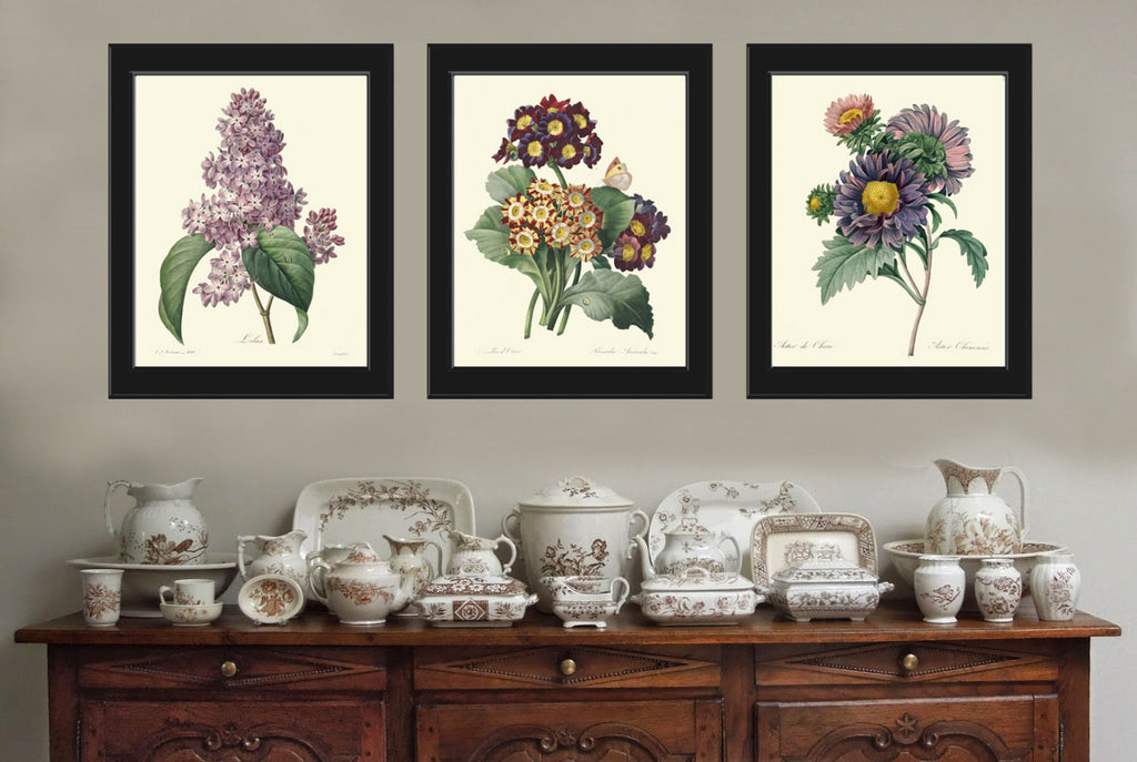 Botanical Print Set of 3 Art  Redoute Antique French Garden Lilac Aster Primula Butterfly Plants Spring Summer Vintage Room Wall Decor