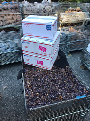 Amethyst Chips (small) - 100 pounds