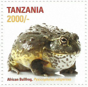 African frog-Bullfrog - Philately Tanzania stamps