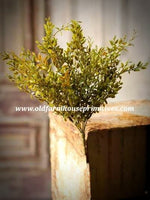 "#LH14 Lemon Beauty Bush 14"" Green"