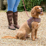 Mutts and Hounds Luxury Grape Leather Lead
