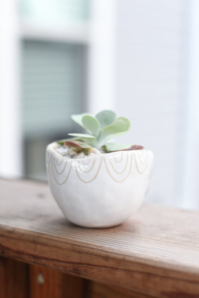 Classic Planter - White Carved Semi-Circles