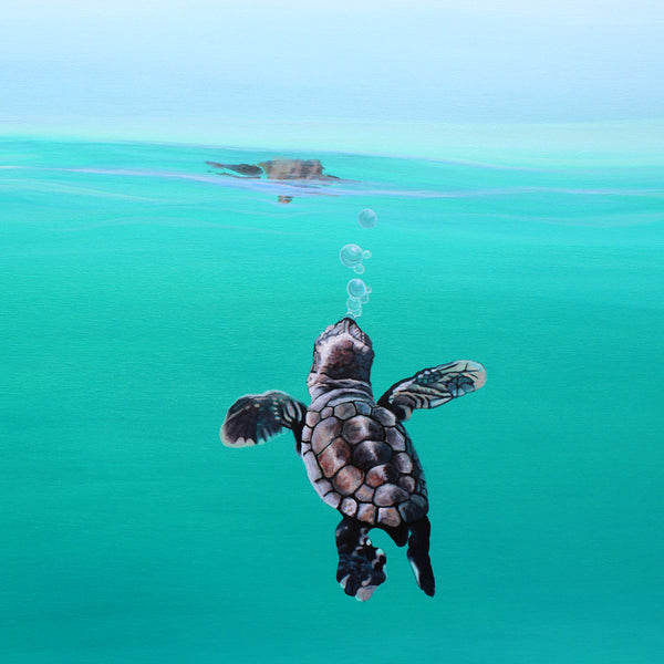 'Baby Turtle Bubbles'