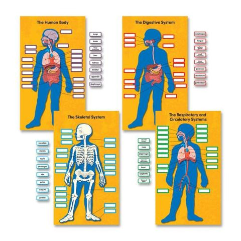 Human Body Bulletin Board Set - 84 Pieces