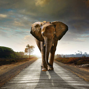 Elephant - Animals Canvas Wall Art Sub Collection