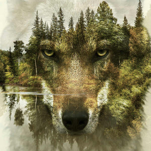 Wolf - Animals Canvas Wall Art Sub Collection