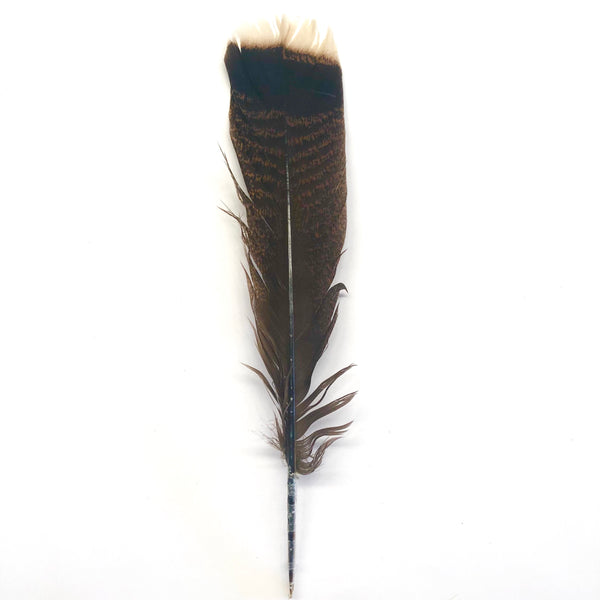 Bronze Natural Turkey Tail Feather 25-35cm