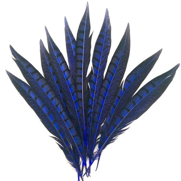"5"" to 10"" Lady Amherst Pheasant Side Tail Feather x 10 pcs - Royal"
