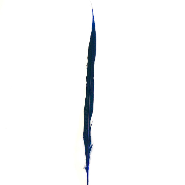 "20"" to 30"" Golden Pheasant Side Tail Feather - Royal Blue ((SECONDS))"