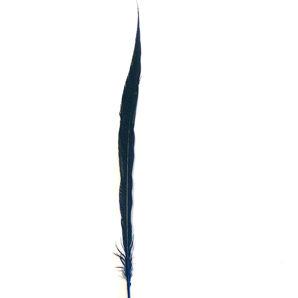 "20"" to 30"" Golden Pheasant Side Tail Feather - Navy Blue"