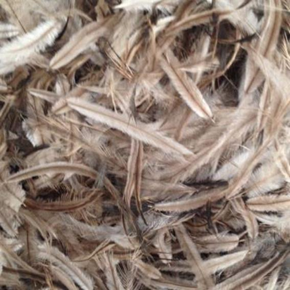 Emu Feathers 5 grams - Natural