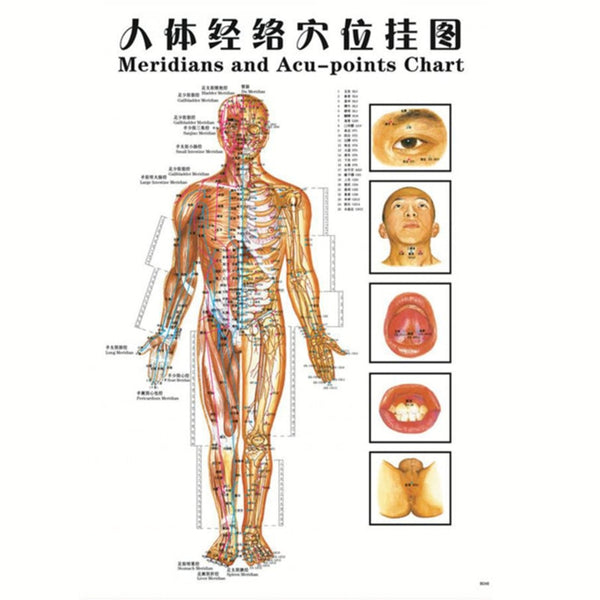 Genuine Chinese, Hand, Foot, Ear & Body Acupuncture Points Chart