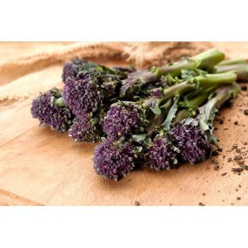 BROCCOLI 'Purple Sprouting' - Boondie Seeds